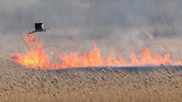 птица в поле над пожаром