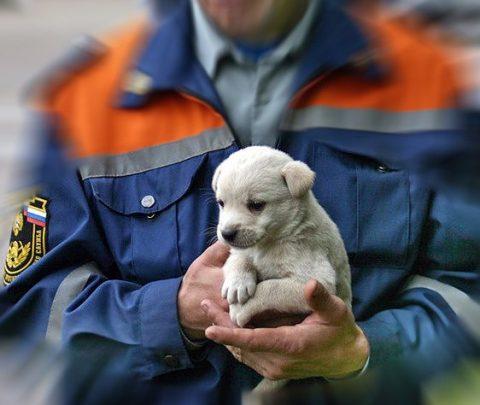 Спасение животных на пожаре