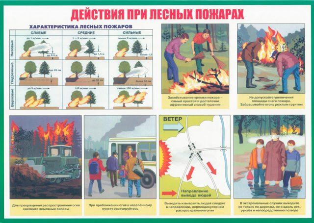 Что делать при возникновении пожара в лесу